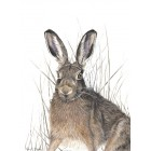 Hare in Reeds + mount