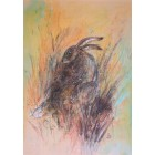 Sitting Hare cards pack of 4