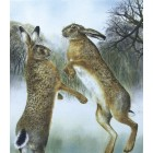 Boxing Hares (small version) unmounted print