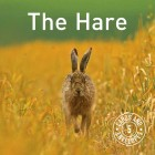 Set of 5 different hares cards inc. p&p